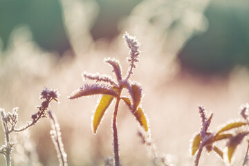 Frozen meadow