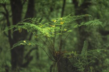 Swineholes Wood. Vibrant green moody, etheral UK forest woodland trees, and foliage.
