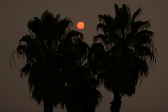 The sun rises behind palm trees as the California wildfires continue, amid the global outbreak of coronavirus disease (COVID-19), in Los Angeles