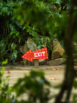Red arrow pointer with the inscription exit surrounded by green plants
