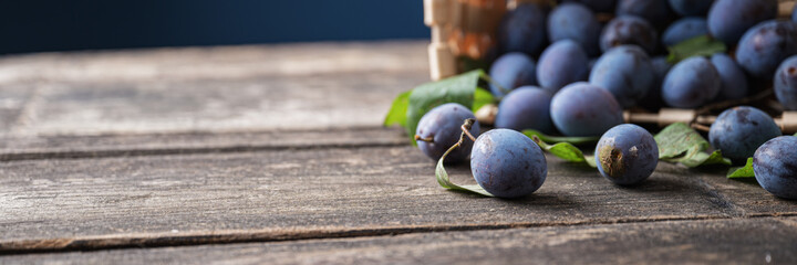 Fresh juicy homegrown plums scattering out of a basket on rustic wooden boards with copy space on the left side of an image