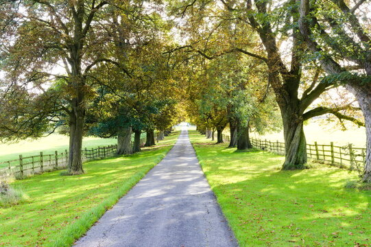 Tree-lined country track with shadows being cast by the trees.