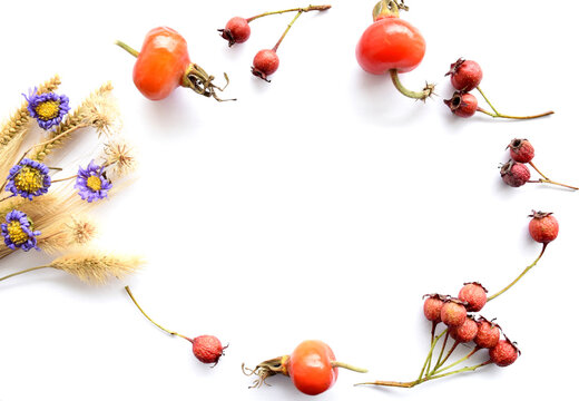 Autumn white background with wild flowers, grass and Russian Far East berries of hawthorn, rose hips. Copy space, oval frame