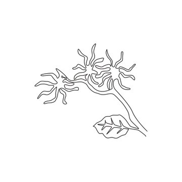Single continuous line drawing beauty fresh witch hazels for home wall decor art poster print. Decorative snapping hazel plant concept for floral card. Modern one line draw design vector illustration