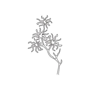One continuous line drawing beauty fresh witch hazels for home art wall decor poster print. Decorative deciduous shrubs plant concept for invitation card. Single line draw design vector illustration