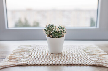 Cactus in pot on natural cotton twine mat rug on rustic wooden background. Eco style with green plant. Modern macrame handmade. Knitted home decoration concept