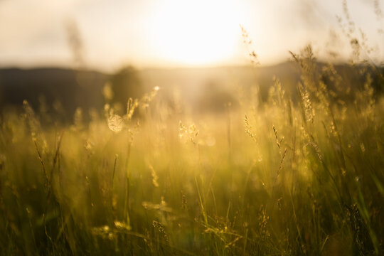 Green grass in a forest at sunset. Blurred summer nature background.