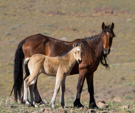 horse and foal wild horses