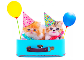 party cute kittens