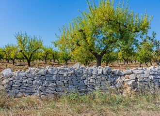 Close up of a countryside tree with a dry stone wall