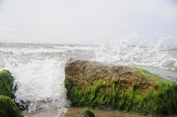 Kamień, Fale, Glony, Glony na kamieniu, Morze, Wzburzone fale, Plaża