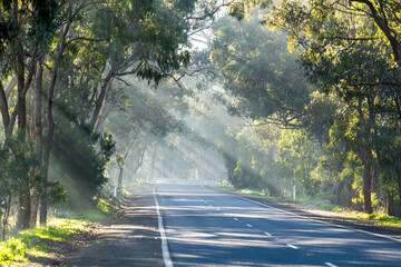 Light beaming through gum tress over a country road