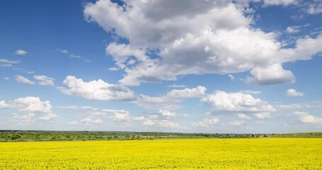 Fototapete - Blue Sky and white clouds above yellow Field Sunflower, panoramic view. Beautiful scenic dynamic Landscape agricultural land, 4K Time lapse. Beauty nature, Agriculture.