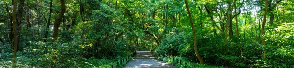 緑があふれる森と遊歩道の風景写真