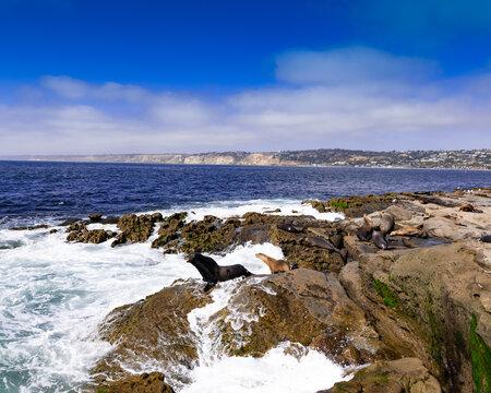Seals On Sandiego Shore Line. High quality photo