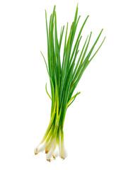 Fototapeta Isolated Scallion or Green onion or Spring onion on white background. obraz
