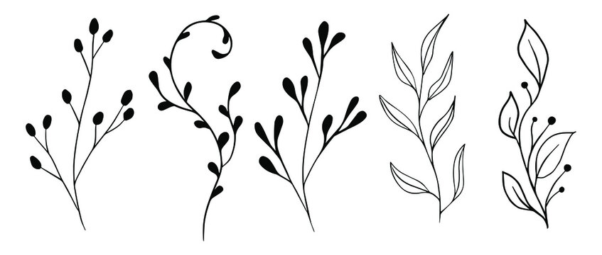 Vector branches and leaves. Hand drawn floral elements. Vintage botanical illustrations.Floral branch with berry.