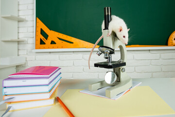 Funny rat sit on microscope. Banner for university college or school with copy spase.