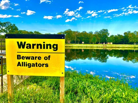 Beware of Alligators Sign with Alligator in the background