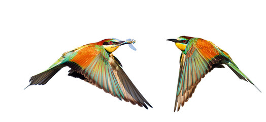 colorful wild birds isolated on white background