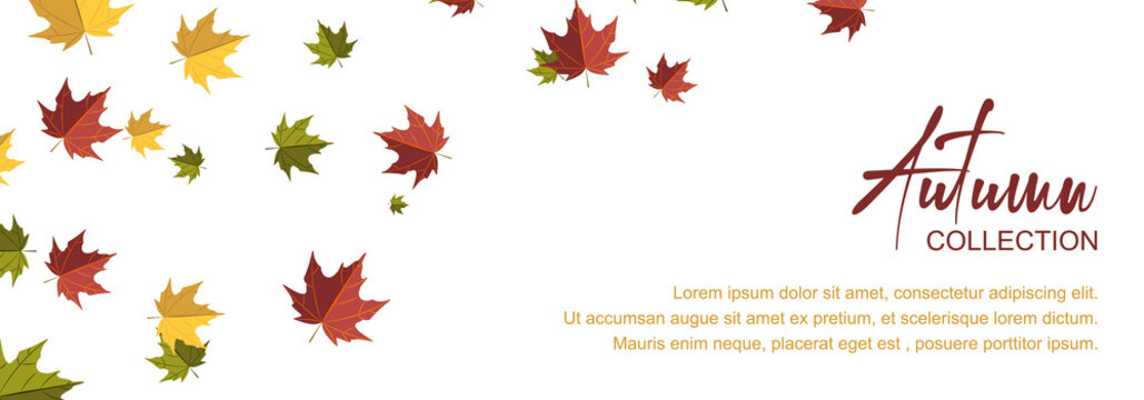 Autumn horizontal design with colorful falling leaves. Place for text. Vector illustration