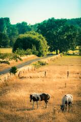 Garden Poster Sheep Spätsommer im Naturschutzgebiet Riddagshausen