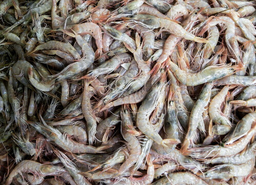 dried fish on the market, fish for shrimp in the basket