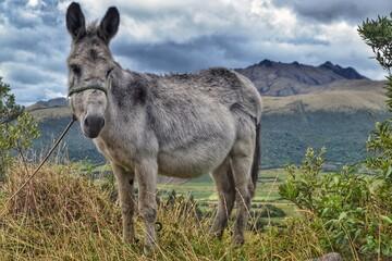 donkey in the meadow