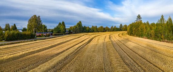 Aerial drone panorama just harvested small wheat field, crops have been recently gathered. Pine tree forest on right, red wooden summer cabins and houses on left side of field.Sweden. Straw rows.