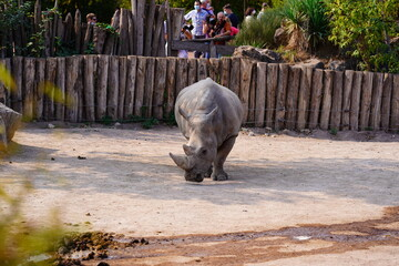 rhino in the zoo