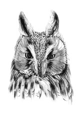 Hand drawn owl portrait, sketch graphics monochrome illustration