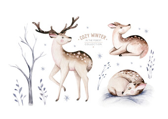 Watercolor winter forest animals deer isolated on white background. Wild forest fawn nimals set. Hand painted winter christmas card