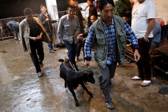 Man pulls a goat for sale at a livestock market in Ganluo county of Liangshan