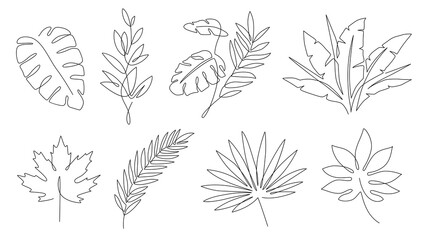 Wall Mural - Tropical leaves. Palm tree and maple linear leaf. Tropic jungle and beach floral abstract elements continuous line exotic plant vector set. Summer leaf palm, jungle foliage and tropical illustration