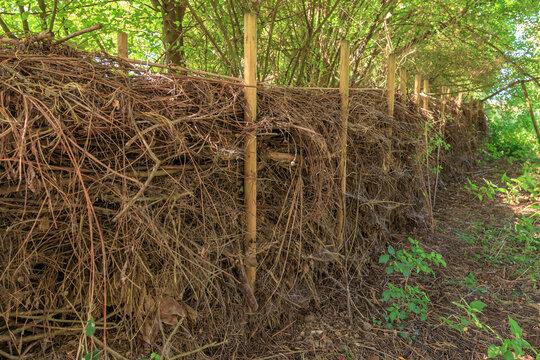 Benjeshecke aus Totholz als natürlicher Komposter