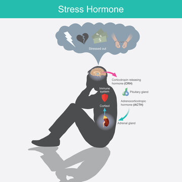 Stress Hormone. Diagram showing the stress response in human body from stimulation of the brain..