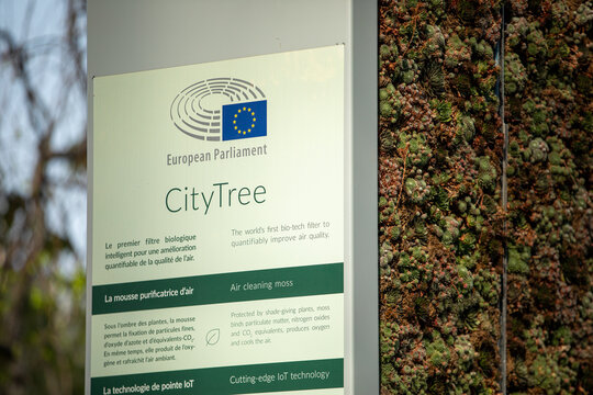 Brussels, Belgium - September 14, 2020: details of the city tree near the European Parliament