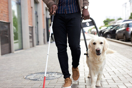 golden retriever assist black afro man, help across city streets, use cane for disabled, walk