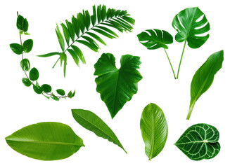 set of green monstera palm banana and tropical plant leaf on white background for design elements, Flat layd.