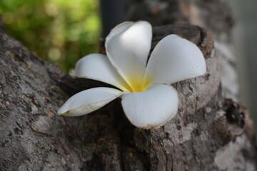 flowers on tree