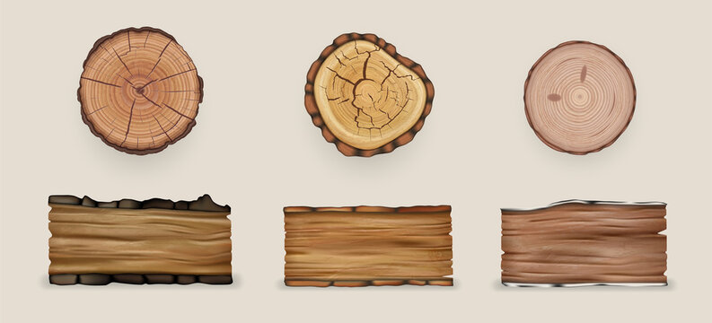 Realistic wood set collection. Illustration of realism style drawn wooden cutting stumps and textured planks on white background. Mockup of cracked demolished natural oak birch tree piece of timber.