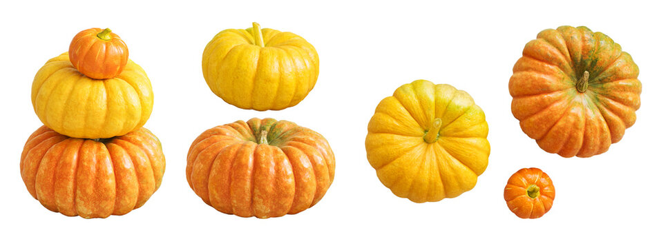 Natural pumpkin isolated on white background. Autumn set for design without shadows.