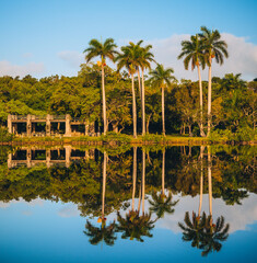 palm trees on the lake reflections