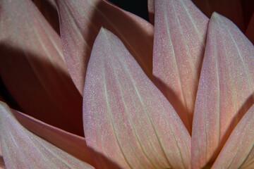 closeup of flower, pattern, texture, background, wallpaper