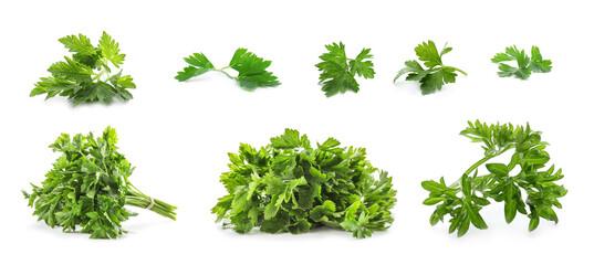 Fototapeta Set with green parsley on white background. Banner design obraz