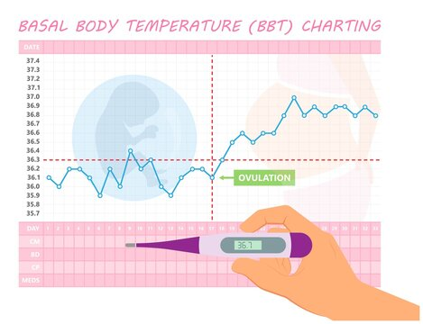 BBT chart basal body day get IUD sex care date plot stop test birth cycle first graph level mucus paper patch phase tract Corpus detect family health luteal luteum method mother record consult period
