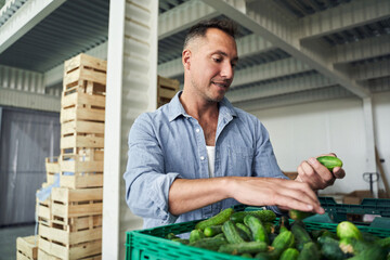 Worker in warehouse sorting cucumbers