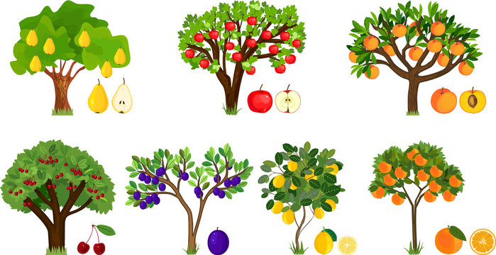 Set of different fruit trees with ripe fruits isolated on white background. Harvest time