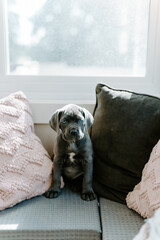 Puppy sitting on couch