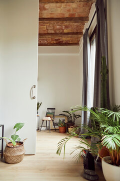 Interior of cozy room with green plants